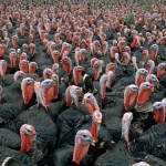 thanksgiving-day-facts-2011_44152_600x450-150x150